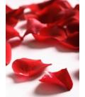 Ruža Šípová - (Kvet lupeňe)