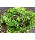 Zelený CHEF MIX rastlín